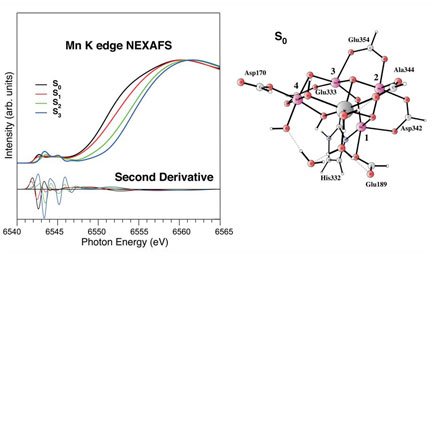 Mn K edge NEXAFS of the manganese catalytic site for water oxidation